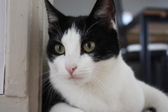 Hera  kitten