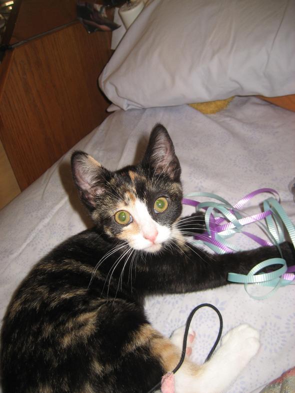 Apache  kitten