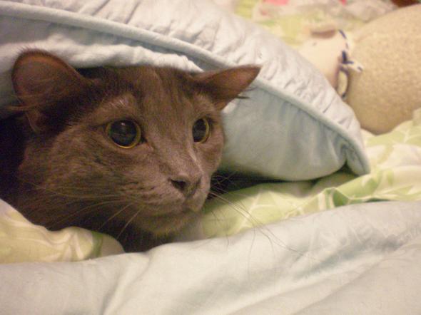 Skitty  kitten