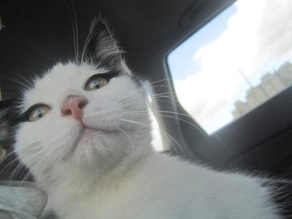 Felix  kitten