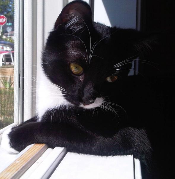 Montague  kitten