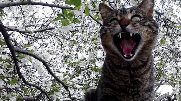 Oscar  kitten