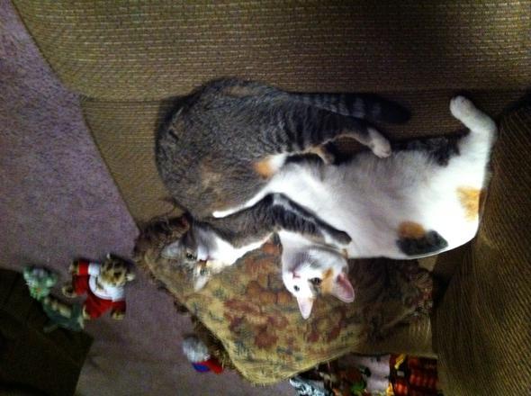 Bella & Mak  kitten