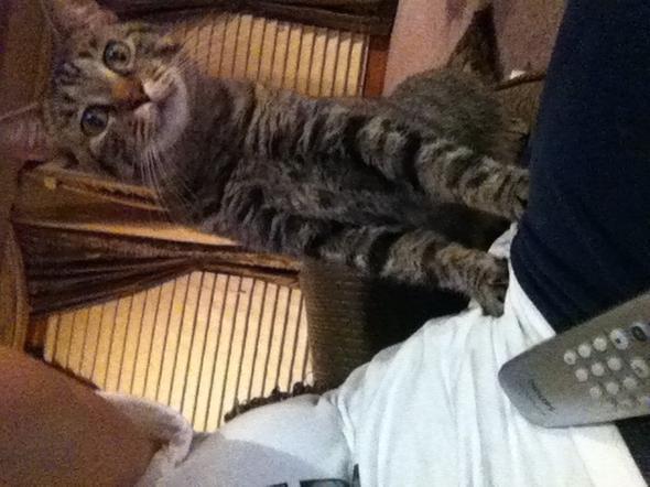 Lilly   kitten