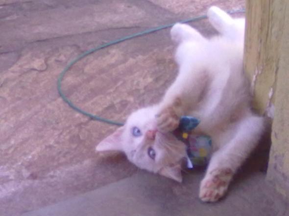 MUNAN  kitten