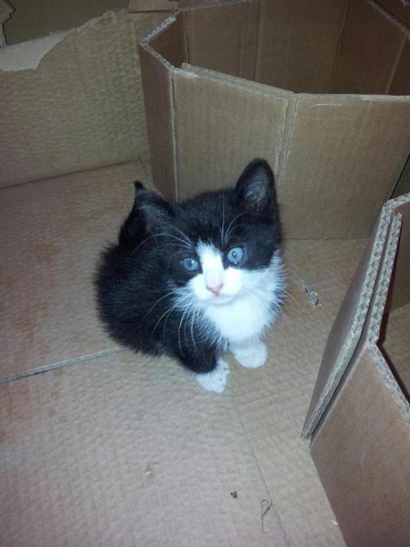 Mika  kitten