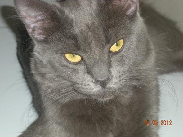 Ollie  kitten