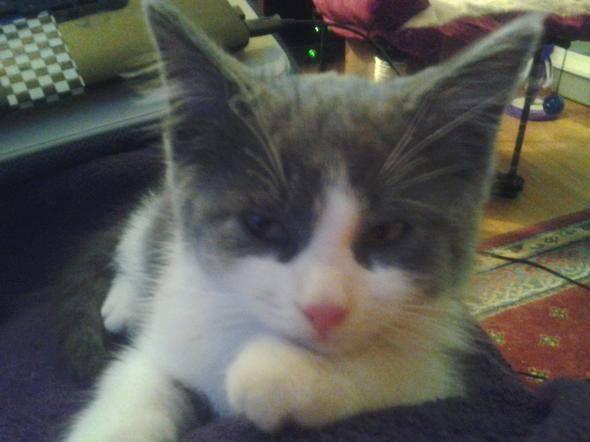 Jack   kitten