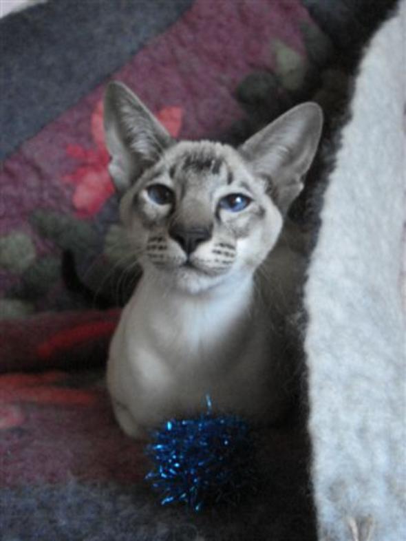 MrMoon  kitten