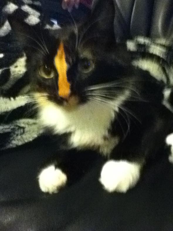 lizy  kitten