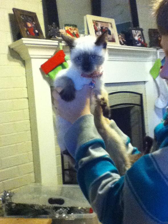 minka  kitten