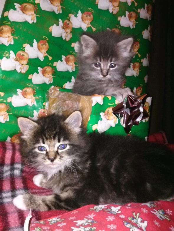 Jackson, Simon  kitten