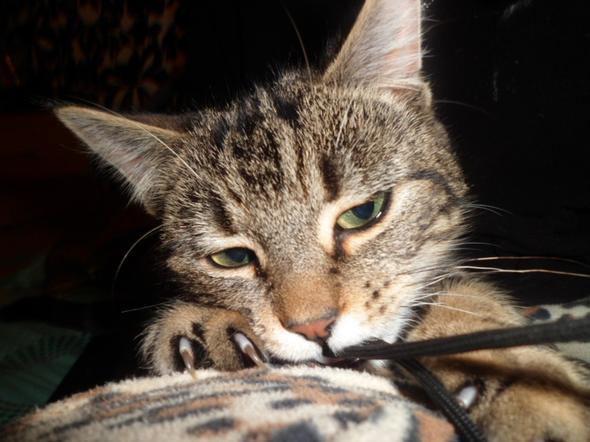 Rodney  kitten