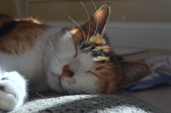 Ruby  kitten