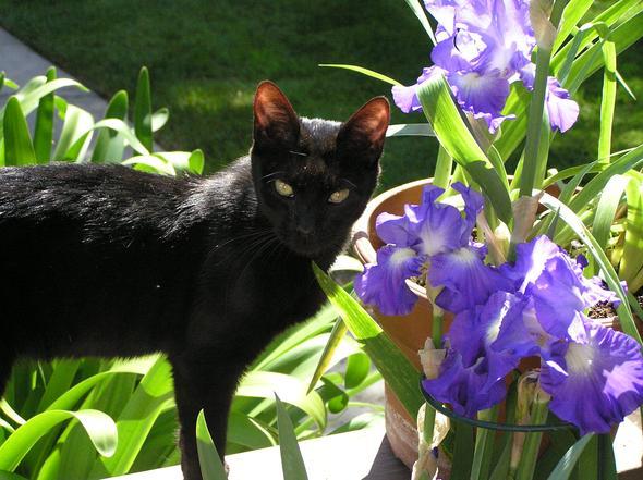 Jinx  kitten