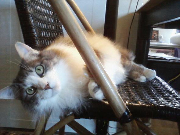 Monty  kitten