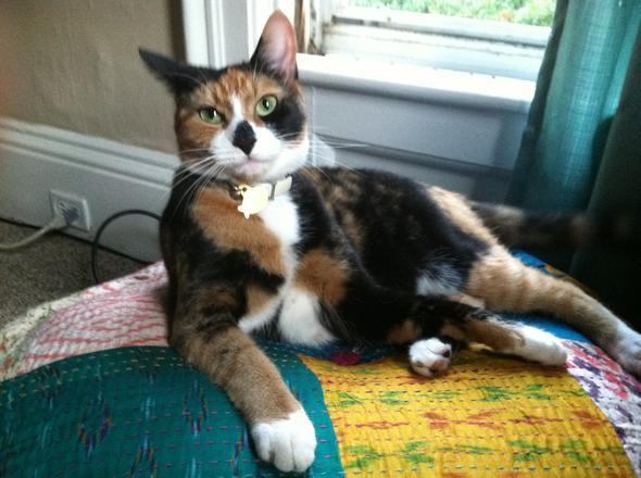 Chloe   kitten