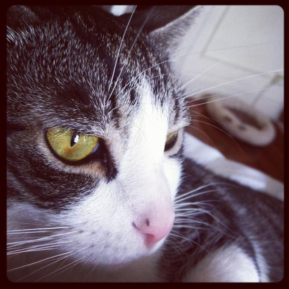 Pulgoso   kitten