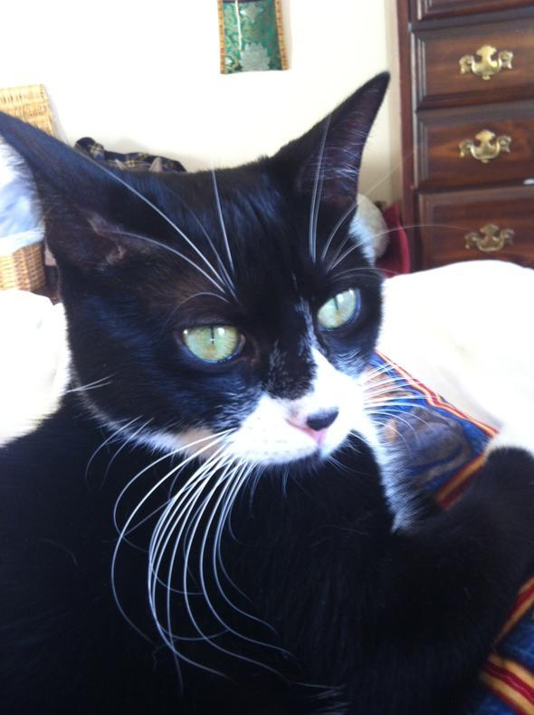 Penelope Guinness   kitten