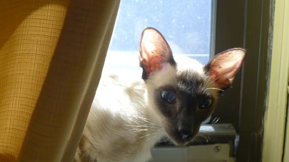 Nikki  kitten
