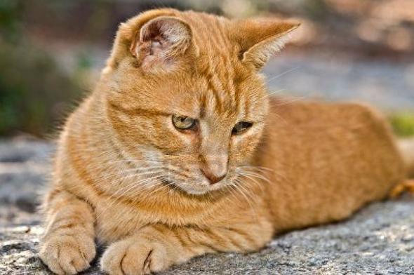 Spunky  kitten