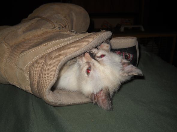 Suki  kitten