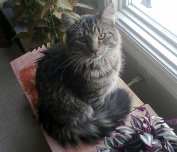 Buster Lex Keaton 3rd  kitten