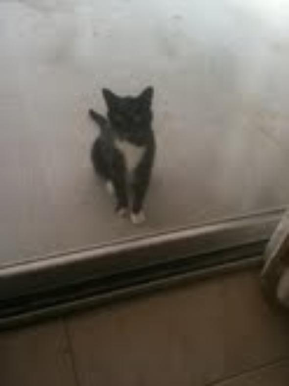 Maxy  kitten