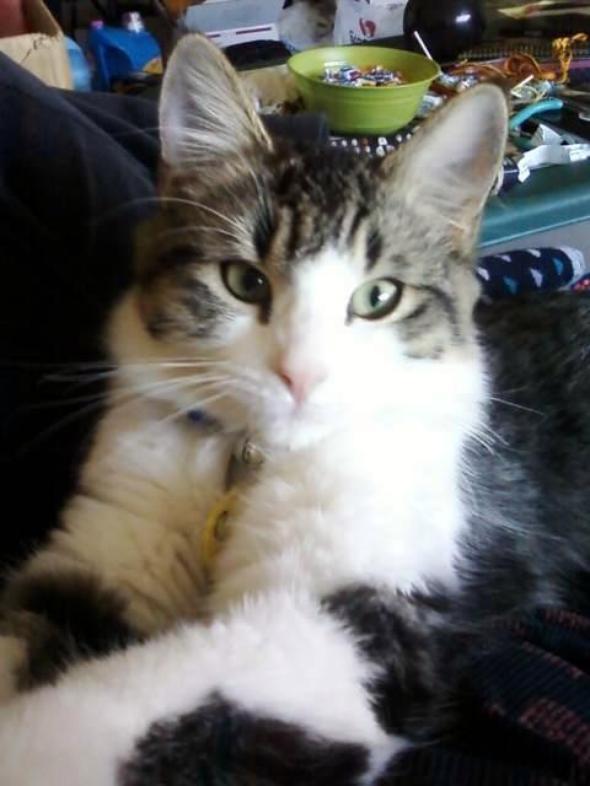 Missie  kitten