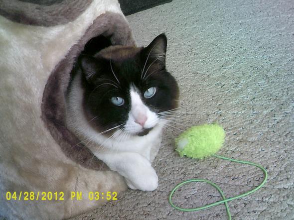 Snickers pt. 2  kitten