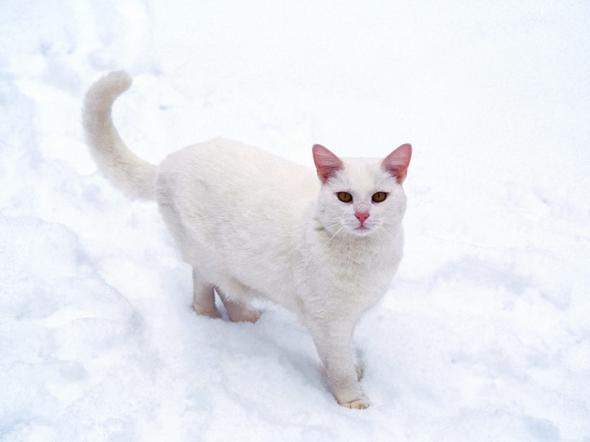 charmed  kitten