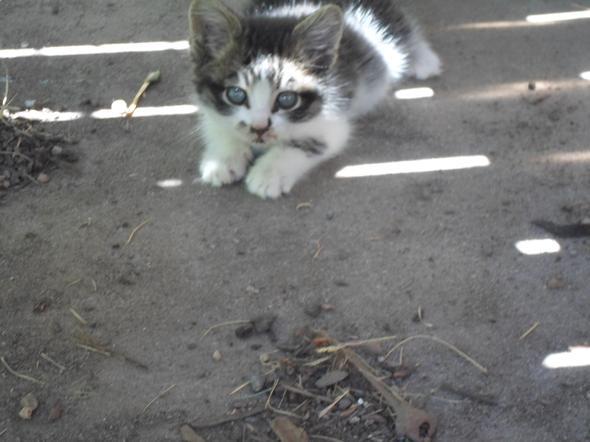 phil  kitten