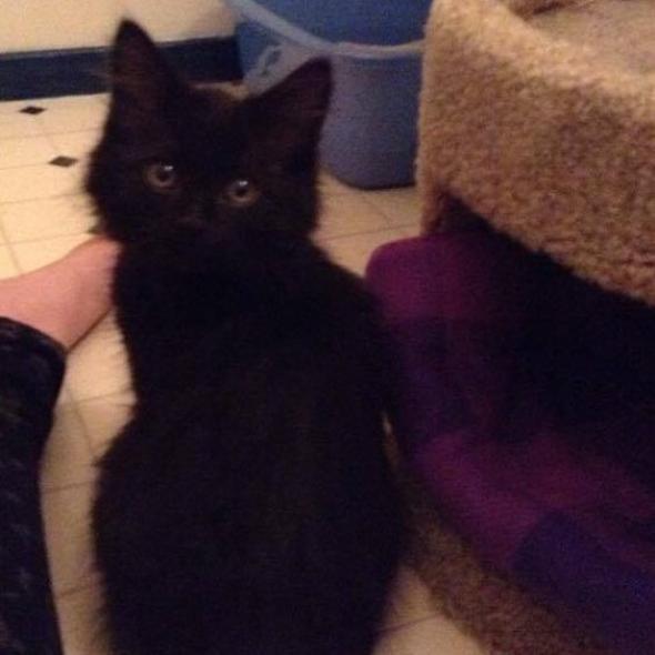 camille  kitten