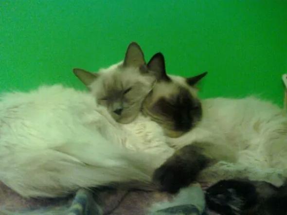 Luna & Sarie  kitten