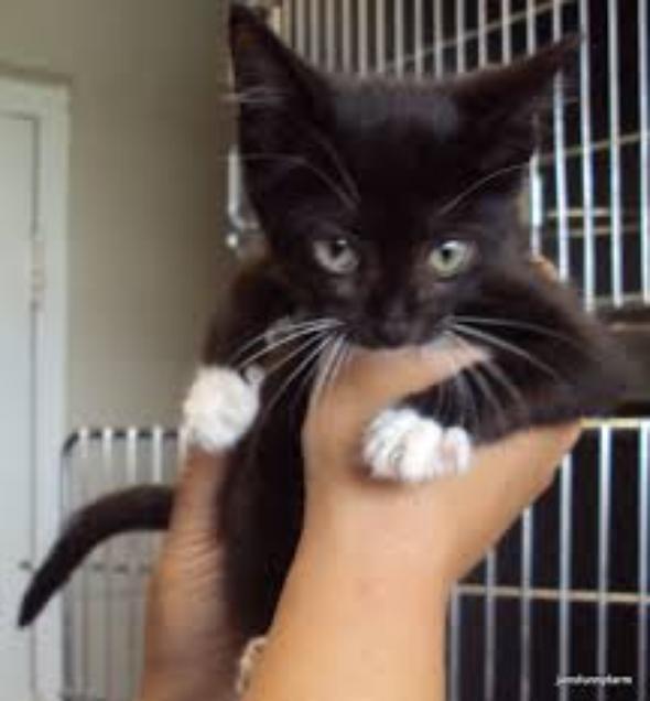 sadie  kitten
