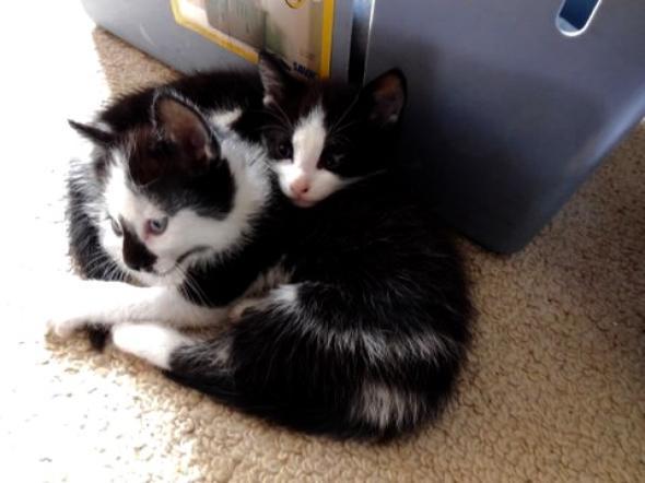 Fluffy and Spotty  kitten