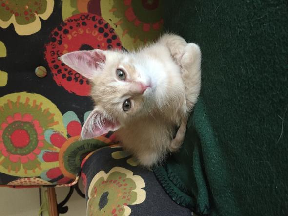 Chance  kitten