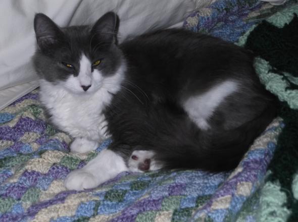 Freyja  kitten