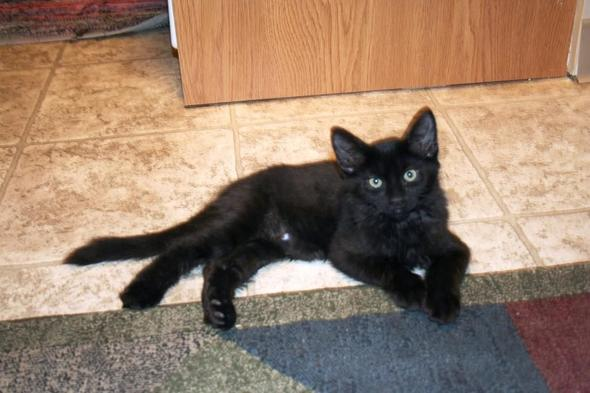 Koobah [2] kitten
