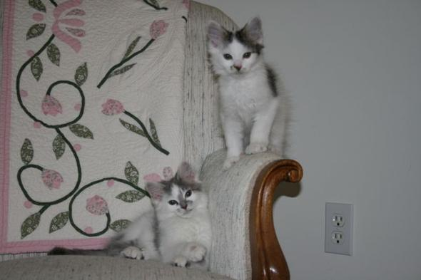 Dove and Hannah [3]  kitten