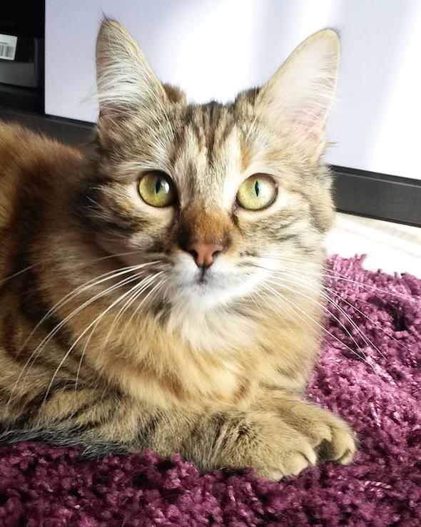 Bonnie kitten