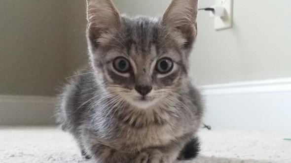 Sophia's Kitten [2] kitten