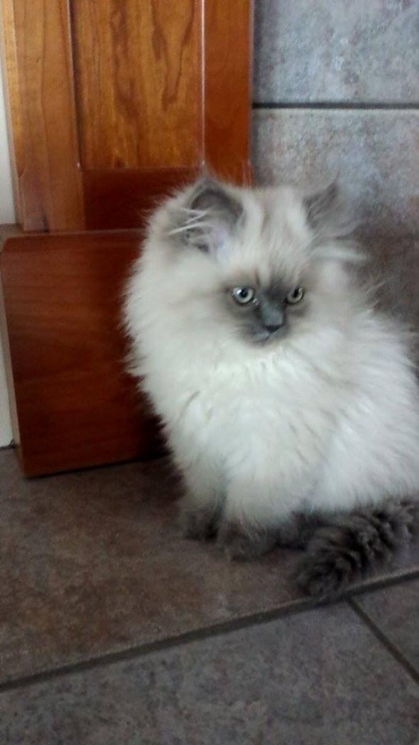 Benson [3] kitten