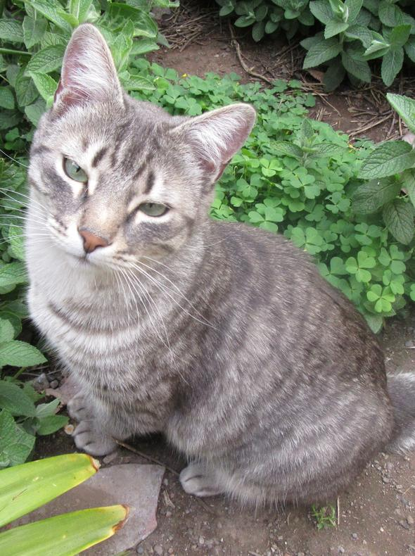 Fermín [2] kitten