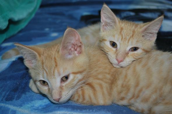 Sheldon and Amy kitten