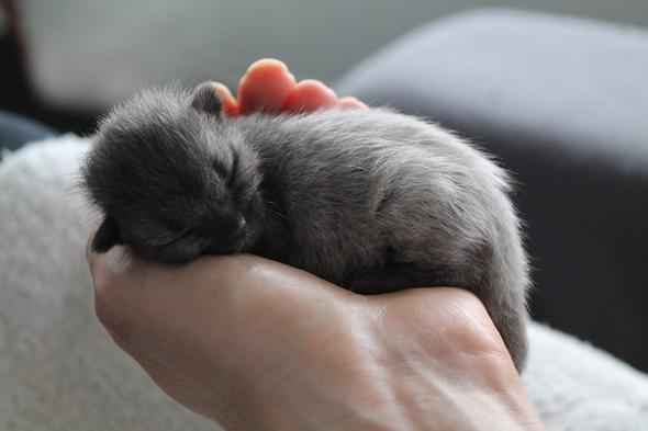 Bruce the Cat kitten