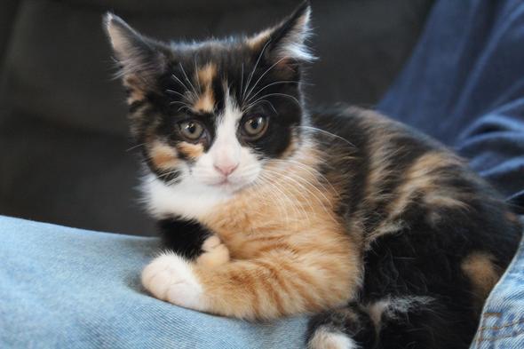 Abbie [3] kitten