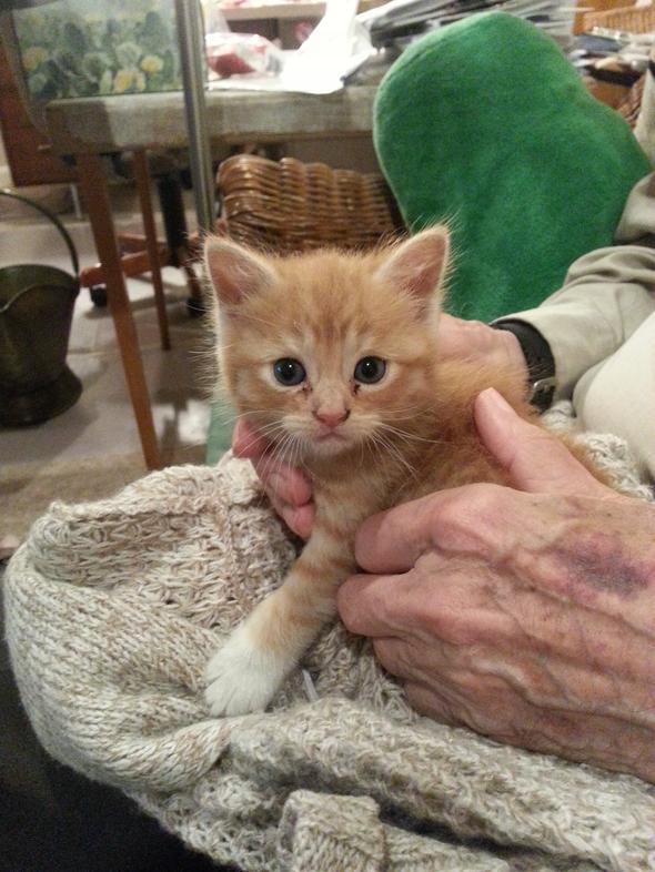 Callaghan [2] kitten
