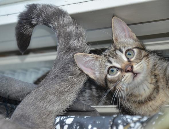 Elias  kitten