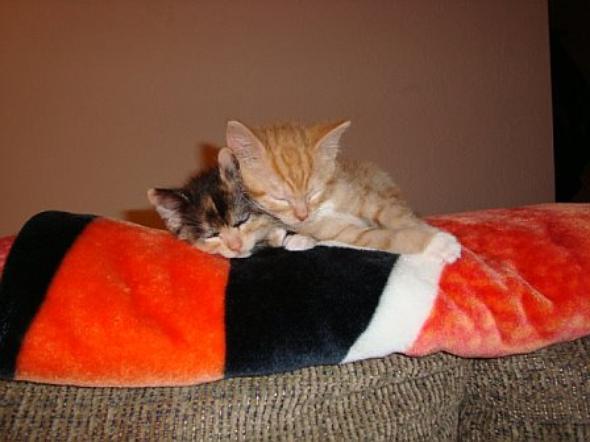 Bill and Izzie  kitten